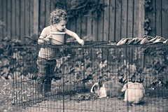 Chores (jayneboo) Tags: bw pets childhood mono toddler child feeding jobs 85mm granddaughter responsibility rabbits care roni tones chores twoandahalf