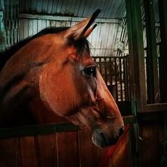 lklinika #horse #clinic (marianemes) Tags: horse august clinic 06 2015 instagram ifttt 1224pm lklinika