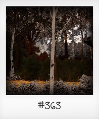 """#DailyPolaroid of 25-9-16 #363 • <a style=""""font-size:0.8em;"""" href=""""http://www.flickr.com/photos/47939785@N05/30906080703/"""" target=""""_blank"""">View on Flickr</a>"""