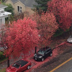 Red View (Melinda Stuart) Tags: berkeley bayarea deciduous trees autumn leaves fallen street cars parked urban historic yellowline