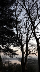 Evening silhouette (timothyhart) Tags: river severn gloucestershire silhouete trees evening winter