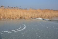 Seebad Mörbisch (anuwintschalek) Tags: nikond7000 d7k 18140vr austria burgenland mörbisch mörbischamsee seebadmörbisch neusiedlersee neusiedl jää ice eis talv winter january 2017 järv see lake kõrkjad schilf reeds