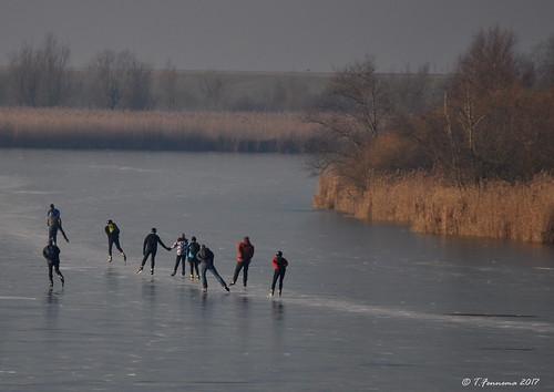 Ice skating Oostvaardersplassen