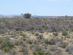 South Africa Countryside (benyeuda) Tags: mountainzebra mountainzebranationalpark nationalpark southafrica africa