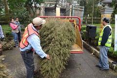 Recibirá UAEM árboles navideños para composta https://t.co/sdH1uB2r6O https://t.co/IUlohByhS9 (Morelos Digital) Tags: morelos digital noticias