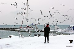 Woman feeding hungry fearless seagulls at the harbor in Thessaloniki (George @) Tags: george eyes papaki woman feeding hungry seagulls seagull food flying fly γλάροι γλάροσ birds sea coast marine port harbor nature boat circling βάρκεσ λιμάνι χιόνια snow winter snowy motion flight eating outdoor outdoors wild animals fearless water magic catching look coastland bird coastline vacation daytime outside lady person greece greek ελλάδα thermaikos thessaloniki μακεδονία macedonia photography photomaniagreece visitgreece greekphotographers landscapephotography europeanphotography naturephotography amazing macedoniagreece makedonia
