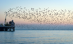 Another day, another sunset, another murmuration (hehaden) Tags: starlings murmuration sea sunset pier palacepier brightonpier helterskelter brighton sussex sel55f18z