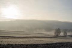 Winter morning at Sendelbach N°3 (Bernhard_Thum) Tags: bernhardthum thum nikond800e carlzeiss frankennature zf sendelbach earlymorning otus1455 distagonotus5514zf zf2