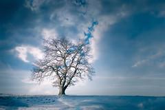Alternative Milky Way (Martin Zurek) Tags: texture cloud clouds 5dsr zeiss canon5dsr distagont2815 distagon light snow landscape nature milkyway bavaria bayern milchstrasse sky oak eiche baum tree ze
