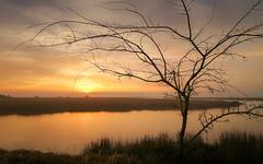 Sunrise on the Marsh (Charles Opper) Tags: barbourriverlanding canon georgia harrisneck winter atmosphere clouds color landscape light marsh mood nature river serene silhouette sunrise warm water