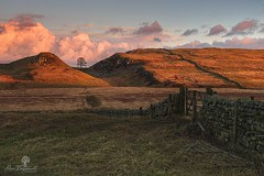 The Gap (Dave Brightwell) Tags: sycamore gap tree wall gate hills sunrise sunshine clouds field leefilters nisifilters formatthitech lowepro manfrotto northeast northumberland england hadrianswall photography photo foto