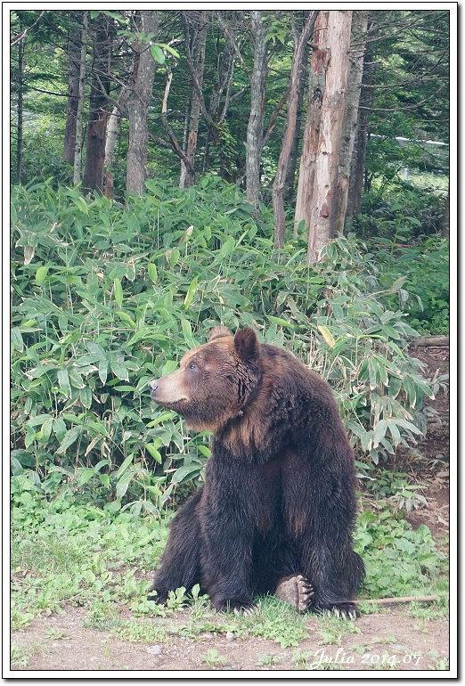 熊牧場 (24)
