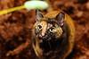 QQ (tseyin) Tags: pet cats pets animals closeup cat kitty neko playtime catlovers bestofcats