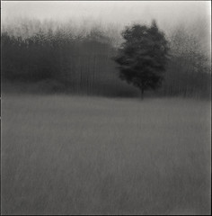Lonely Tree 3 (petr.pogodin) Tags: trees bw painterly abstract tree texture 6x6 beauty mystery analog forest dark enigma hasselblad lonely psychedelic petr somber photoart association enigmatic threshold 80mm edgy explored artlibre pogodin shanghai100
