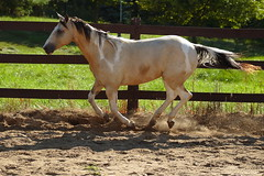 A day at the farm (the_sandman_454) Tags: canoneos20d equine canonef75300mmf456iii