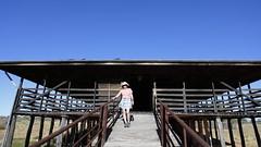 2016.11.17.07.54.16-Kinchega Historic Woolshed (www.davidmolloyphotography.com) Tags: menindee kinchega kincheganationalpark woolshed