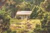 There is a house~!........@Tsui Pond, Mt. Syue, Taiwan. 綠蔭晨光下夢幻的雪山翠池山屋~ (Evo-PlayLoud) Tags: canoneos550d canon550d canon 550d efs18135mmf3556 efs 18135mm 18135mmkit mountain landscape scenery mtsyue taichung taiwan green 雪山 翠池 台中 台灣 武陵農場 wulingfarm 山 高山 百岳 風景 風景照 雪霸國家公園 雪霸 tree trees sunlight lightfantasy hdr grass grassland 山屋 翠池山屋