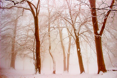 Winter... (Marco Allegro) Tags: