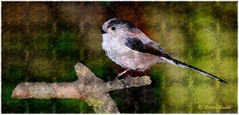 Long Tailed Tit (lukiassaikul) Tags: creativephotography photopainting digitalpainting nature fauna animals wildanimals wildbirds longtailedtit