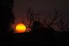 Esos soles con filtro de humo. (Leonardo Alpuin Photography) Tags: sunset atardecer sun sol leonardoalpuin canon contraluz backlighting bahiablanca puestadesol