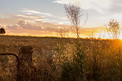 Field of Dreams (AFracturedCrown) Tags: sunset farm golden warmth glow rural country flare outandabout
