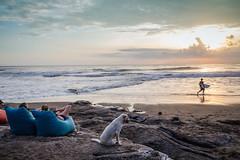 Dog at Echo Beach, Bali (pictcorrect) Tags: bali island echo beach canggu surfers surfing sunset wide angle