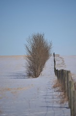 Prairie Winter (jessica.rohrbacher) Tags: winter canada fence trees parallel snow prairie horizon field