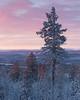 Fulufjället Vinter II (Gustaf_E) Tags: dalarna forest fulufjället landscape landskap morgon pine pines skog snow snö sverige sweden särna tall vinter woods