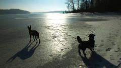 sunshine (Danijelka) Tags: dog dogs animals nature winter sun sunny day love valentines pets cute cuties perfect walk sunshine lake frozenlake