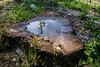 la pozzanghera sul tronco (Clay Bass) Tags: savigliano bole fuji green natural puddle reflections x70