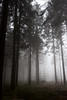 (CarolienCadoni..) Tags: sonyslta99 sal2470z mist fog foggy forest woods mysterious serene photography silhouette earlymorning drouwen