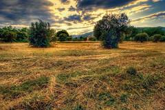 Due (* landscape photographer *) Tags: francavillainsinni italy landscapephotographer paesaggio campo due alberi tree sunset tramonto colori colors clouds nuvole flickr 2017 nikon nikkor valle sinni valley lucania