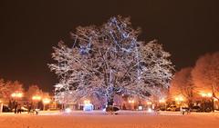 Głowno (Kosmi88) Tags: poland polska nikond60 d60 snow śnieg night longtime experimental tree noc głowno christmas wośp styczeń 2017 january