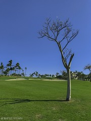 golfcourse_IMG_1127-010 (DRAFDESIGNS) Tags: landscapephotography drafdesignsphotography golfcoursephotos oceanclubgolfcourse ocean oceanview atlanticocean paradiseislandbahamas tree