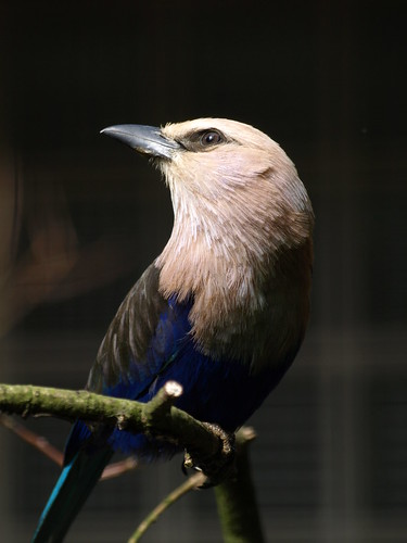 16-06-01 Weltvogelpark Walsrode