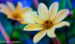 Summer world of Light (frederic.gombert) Tags: color colors flower flowers yellow green light sun sunlight colored blue red macro garden plant nikon d810
