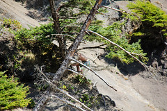 2014-04-13-Pic34-ShortSandsBeach (junglekid_jared) Tags: thebeach 2014 shortsandsbeach ©joejohnson