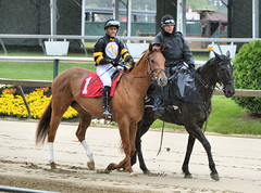 "2015-05-21 (15) r2 Jevian Toledo on #1 Great Smile (JLeeFleenor) Tags: photos photography md marylandracing marylandhorseracing pimlico jockey جُوكِي ""赛马骑师"" jinete ""競馬騎手"" dżokej jocheu คนขี่ม้าแข่ง jóquei žokej kilparatsastaja rennreiter fantino ""경마 기수"" жокей jokey người horses thoroughbreds equine equestrian cheval cavalo cavallo cavall caballo pferd paard perd hevonen hest hestur cal kon konj beygir capall ceffyl cuddy yarraman faras alogo soos kuda uma pfeerd koin حصان кон 马 häst άλογο סוס घोड़ा 馬 koń лошадь rain maryland"