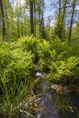 Fern forest (Anders Toomus) Tags: ferns mets ormbunkar jgi snajalg canon7d