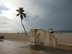 Hollywood Beach Palm Trees (Stabbur's Master) Tags: beach florida palmtree atlanticocean broadwalk hollywoodbeach floridabeach eastcoastbeach