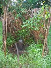 LIEU SACRE (motanbou90) Tags: us noir pierre religion culture tradition sacr cameroon afrique stle anctre peuples lieu croyances coutumes traditionnel bamilk
