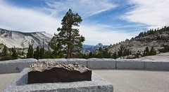 Yosemite 8-2015 (daver6sf@yahoo.com) Tags: trees bronze yosemite halfdome ynp cloudsrest olmsteadpoint