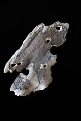 IMG_4989 (j.towbin ) Tags: macro texture nature faces holes bark minimalsim allrightsreserved