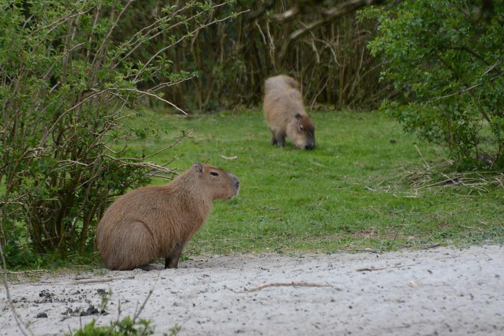 zoo i sønderjylland
