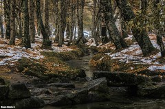 Snowy forest (Mauro Hilário) Tags: forest portugal snow woods woodland serra estrela river water trees nature winter landscape stream outdoor