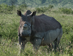 Songimvelo - Humala (jimlustgarten) Tags: lustgarten animals humala songimvelo southafrica ebuhleni mpumalanga za