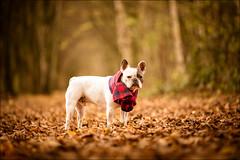 Max (Yannig Van de Wouwer) Tags: walenhoek dog hond huisdier natuurgebied pet