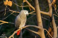 _DSC0597 (shujahjarri) Tags: animals wildlife