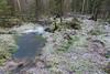 Swamp (JarkkoS) Tags: 2470mmf28eedafsvr d800 espoo finland mustakorpi nuuksio swamp kirkkonummi uusimaa fi