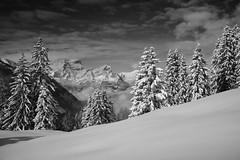 First snow in Glarus (maekke) Tags: glarus touring snowboard winter snow powder pow winterwonderland mountain mountains alps switzerland ch fujifilm x100t backcountry bw noiretblanc nature 2016 35mm matt weissenberge